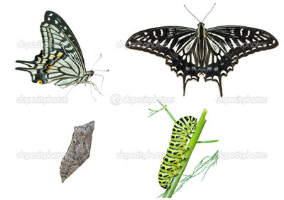 depositphotos_16518111-stock-photo-stages-of-butterfly.jpg